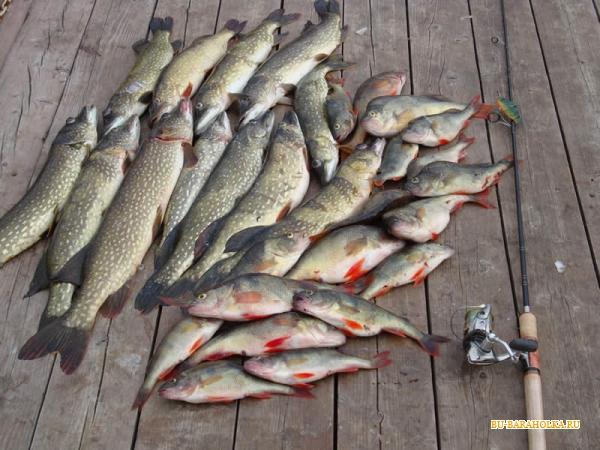 как ловить весной рыбу на реке волга