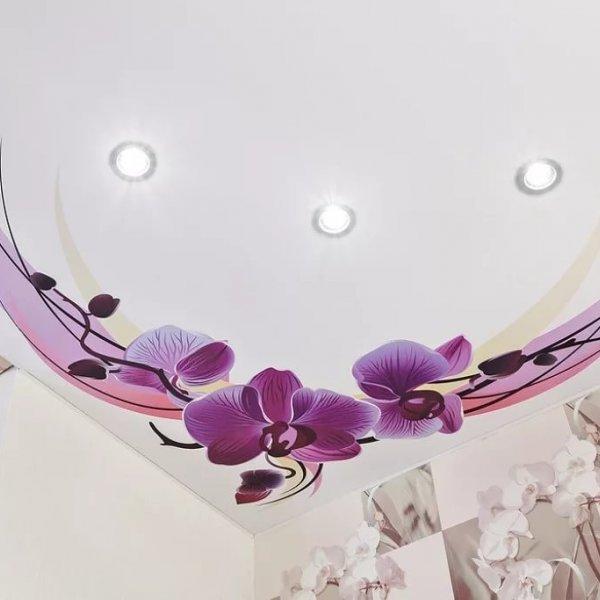 знания варианты картинок орхидеи для натяжных потолков автокресле