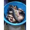 Рыбалка весной в Краснодарском крае и отдых