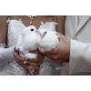 Выпуск свадебных белых голубей у ЗАГСА
