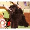 Стрижка собак без наркоза в Казани