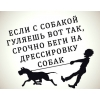 Дрессировка собак в Колпинском районе СПб, г.Колпино. п.Металлострой. п.Понтонны