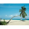 Cейшелы - райский отдых по доступной цене!