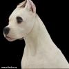 Аргентинского дога подрощеный щенок