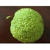 Продается Адамово яблоко, Маклюра