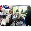 Обучение грумингу, триммингу собак