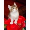 Красавица-котенок в добрые руки