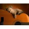 Уроки гитары fingerstyle