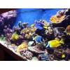 Морские и пресноводные аквариумы под ключ