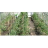 Опоры для садовых растений стеклопластиковые от производителя.