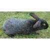 Кролик Серебристый, крольчата для дальнейшего разведения, самцы!