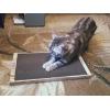 Новинка! Когтеточки для кошек в Петрозаводске!