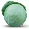Семена белокочанной капусты Хонка F1 (Китано)