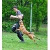 Дрессировка собак всех пород с 4-х месяцев и старше с содержанием в питомнике