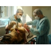 Весенняя акция в ветеринарной клинике Кутлиматова