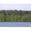 12,42 га Озеро Тригорское, сосновый лес. Выборгский район