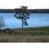160 соток на берегу озера Красавица, Выборгский район, сосны