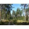 участок 80 соток, у деревни Черничное, Выборгский р-н, сосновый лес, река