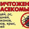 уничтожить травить истребить клоп нет мыши муравьи блохи