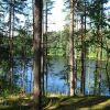 """Участок """"Озеро Тригорское"""" 12, 42 га.  Сельхоз.  Выборгский район."""