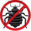 Абсолютное уничтожение клопов, тараканов, муравьев.