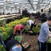 Женщины на посадку и срез цветов